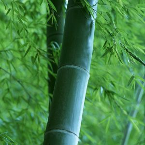 Bamboo & Teak Fragrant Oil