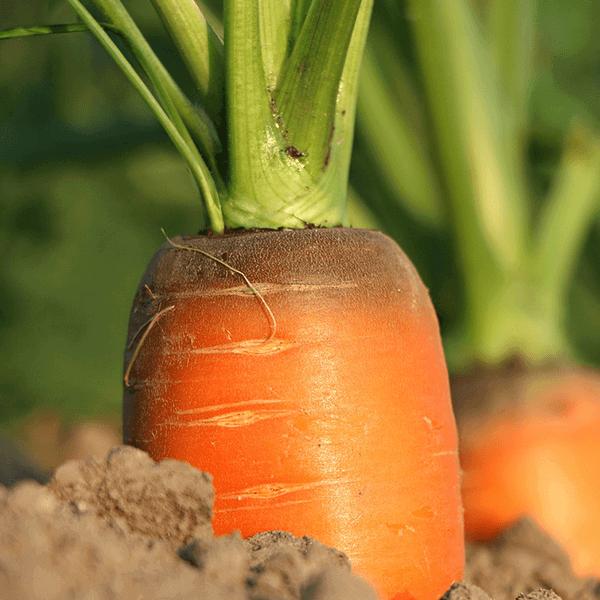 Carrot Butter