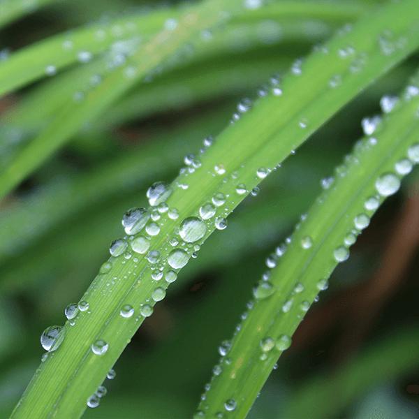 Lemongrass Verbena Fragrant Oil