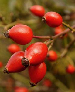 Rosehip (Unrefined) Organic