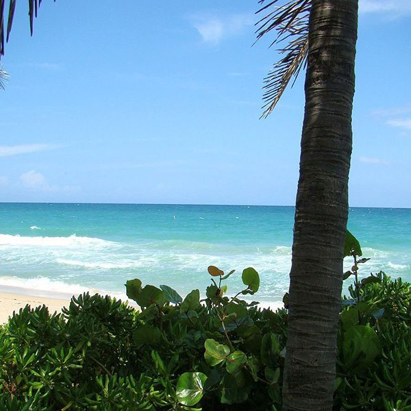 Ocean Breeze Fragrant Oil
