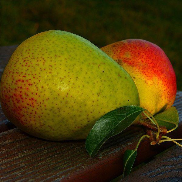 Pear Fantasy Fragrant Oil