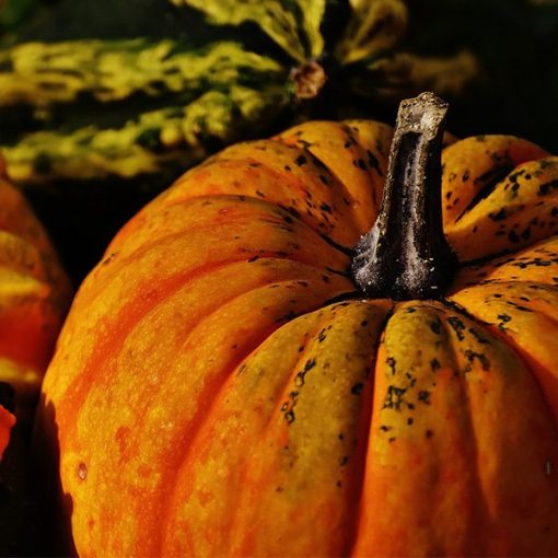 Pumpkin Delight Fragrant Oil