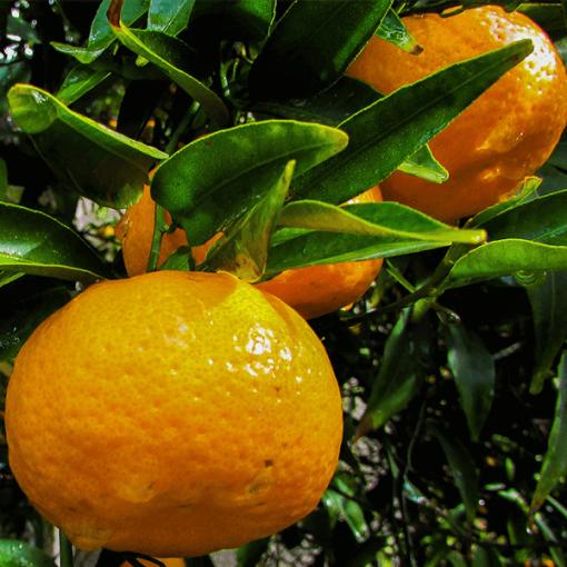 Tangerine Butter