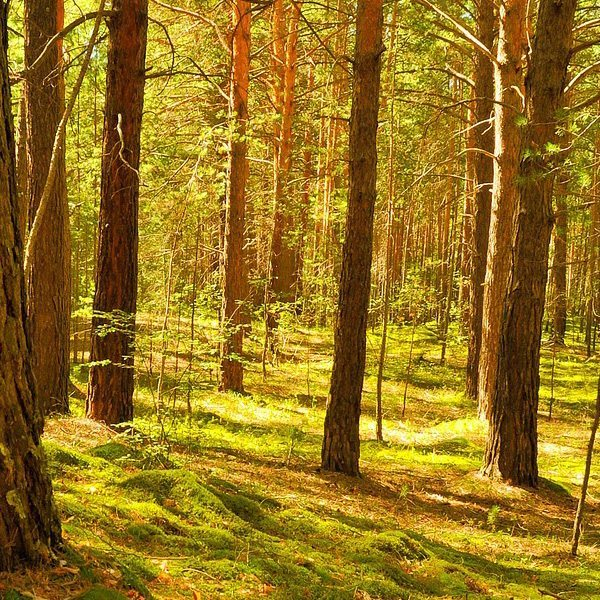 Woodland Themes Fragrant Oil