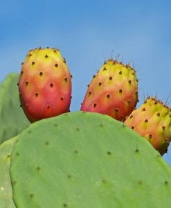 Prickly-Pear-Butter