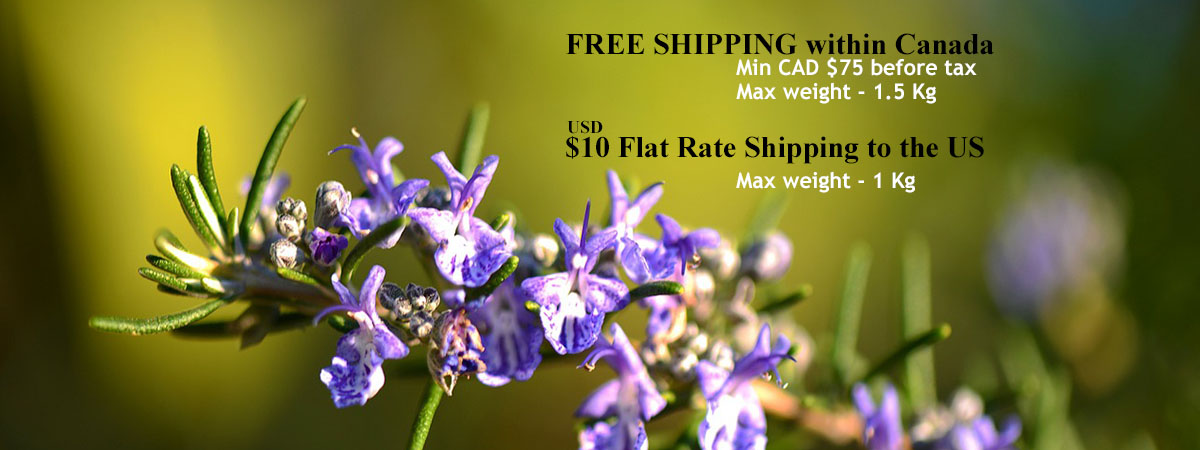 Rosemary Banner-1200x450 - $75 Free Shipping
